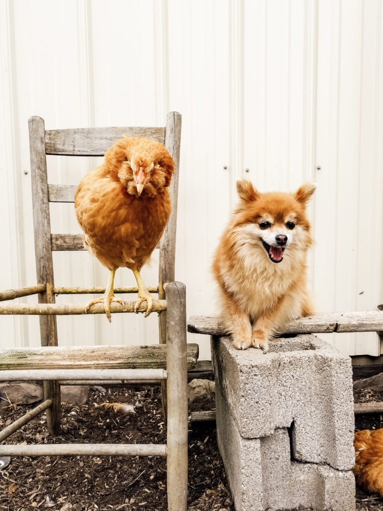 Raising Backyard Chickens: A Beginner's Guide