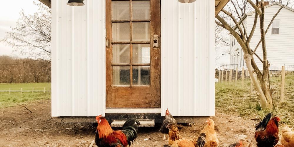 Farm & Garden Moden Farmhouse Chicken Coop Diana Marie Home