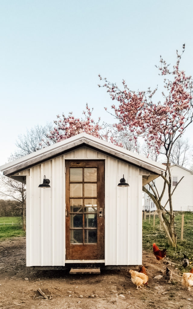 Our white farmhouse chicken coop in spring on the farm