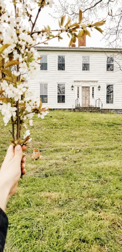 Diana MArie Home A white farmhouse in Spring