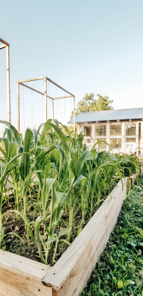 Corn Bed | Diana Marie Home