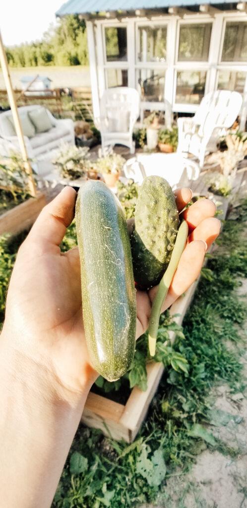 Zuchinni Harvest | Diana Marie Home