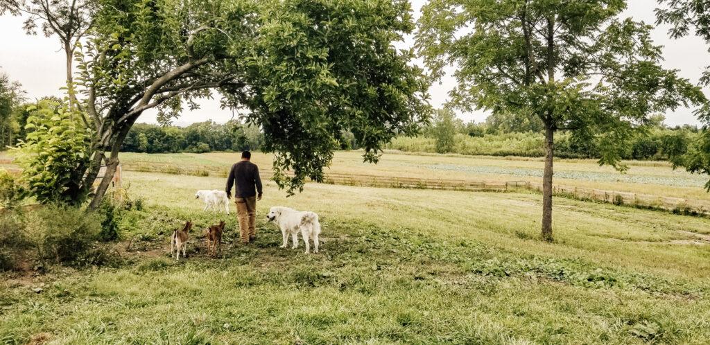 We Got GOATS | Diana Marie Home | Flint Creek Farm