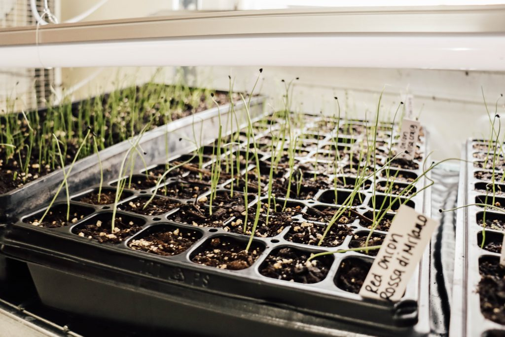 How I am starting all my seeds early | Diana Marie Home